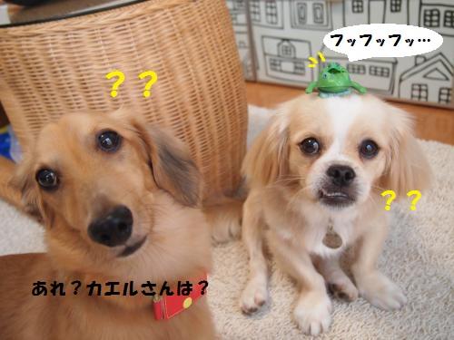 009_convert_20130820215806.jpg