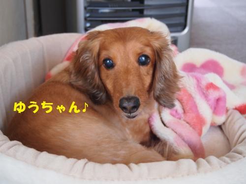010_convert_20130513222000.jpg