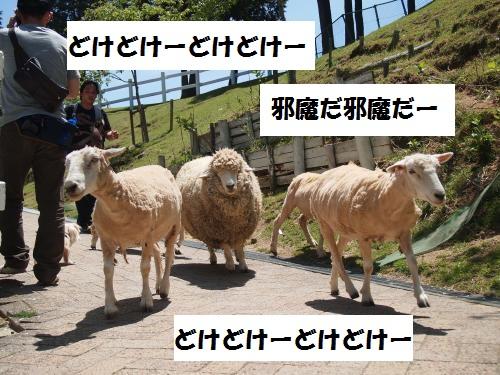 010_convert_20130519164053.jpg