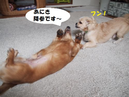010_convert_20130905152701.jpg