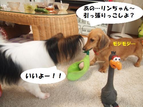 011_convert_20130801134446.jpg