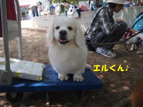 016_convert_20130526151909.jpg