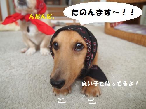 019_convert_20130807142732.jpg
