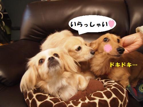 019_convert_20131027221235.jpg