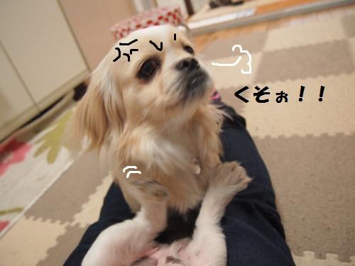 025_convert_20130413224626.jpg