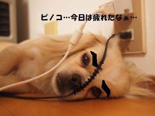 025_convert_20130526152631.jpg