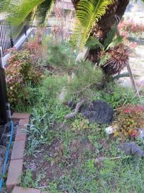 3-22北の庭