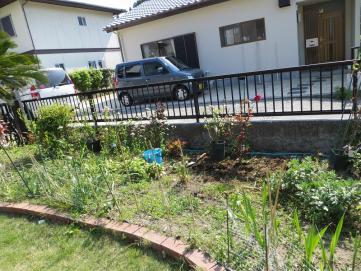 5-9北の庭バラ1