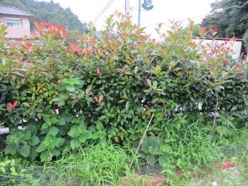 7-11北花壇2