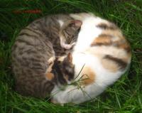 ハイネスお庭の猫
