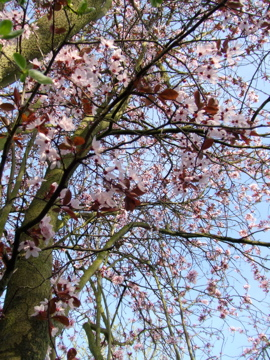 4月の木の花