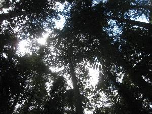森の健康診断(0929)j