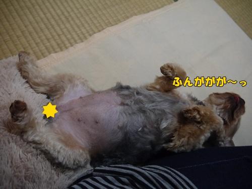 眠るミニィー