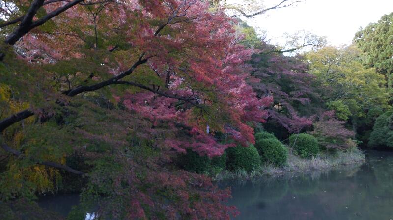20131115京都府立植物園1
