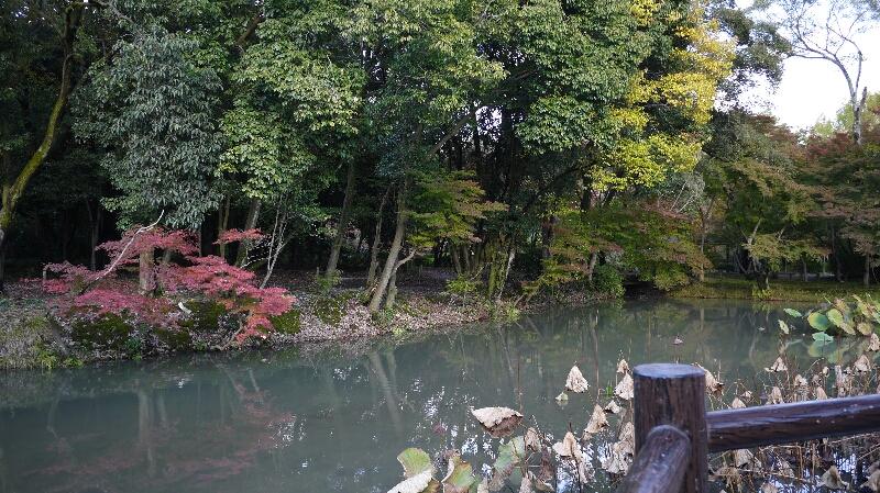 20131115京都府立植物園3