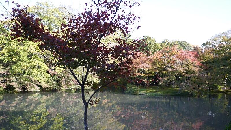 20131115京都府立植物園2