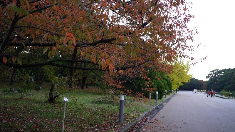 20131115京都府立植物園4