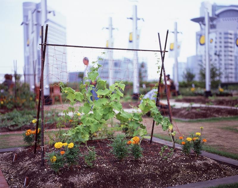 天空の農園