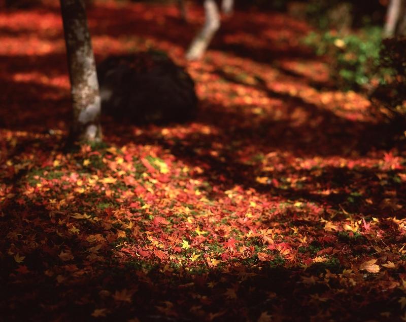 圓光寺の紅葉5