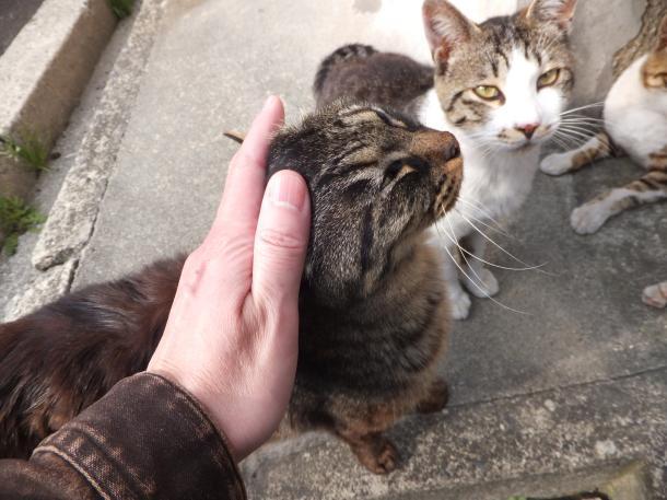 猫23,24,25