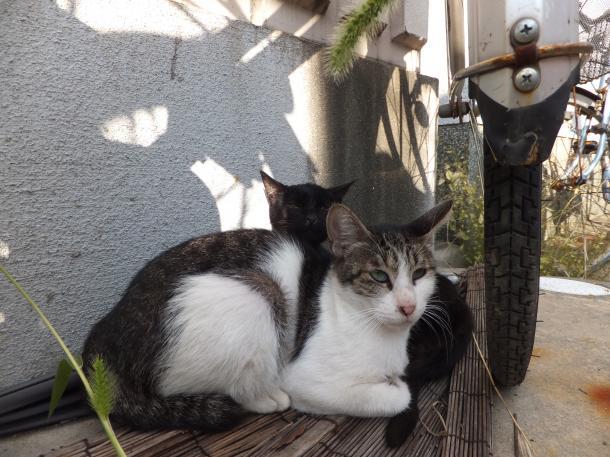 猫42,43
