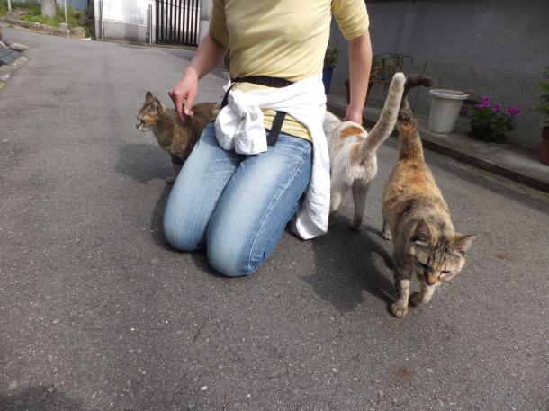 猫12,13,17