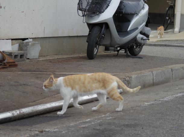 猫24,25