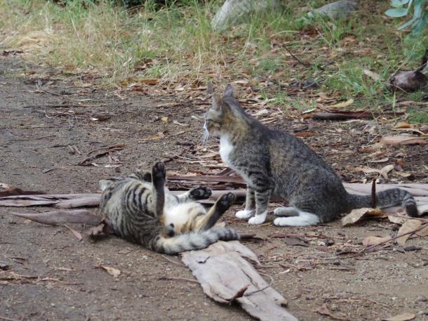 猫8,10