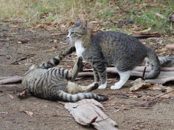 猫8,9,10
