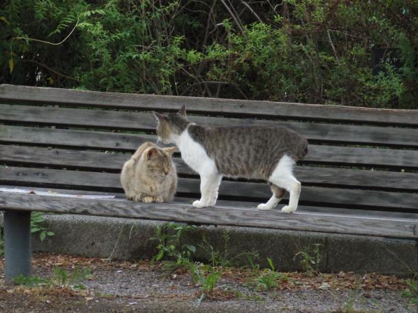 猫3,15