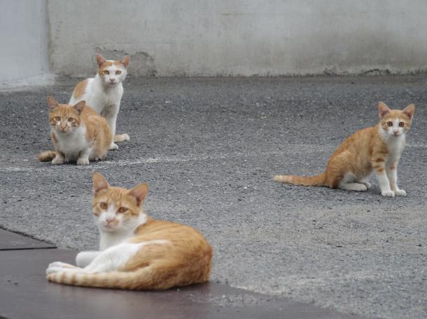 猫14,15,16,17