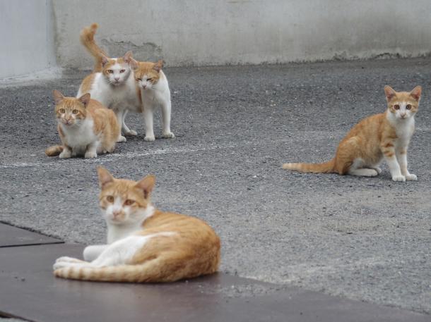 猫14,15,16,17,18
