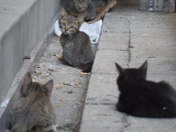 猫10,11,12,13