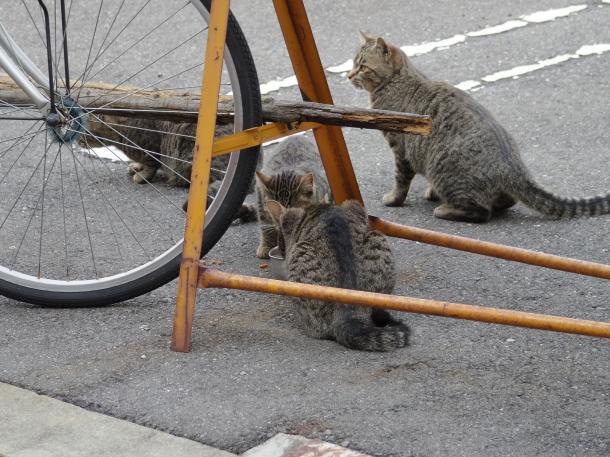猫16,17,18,19