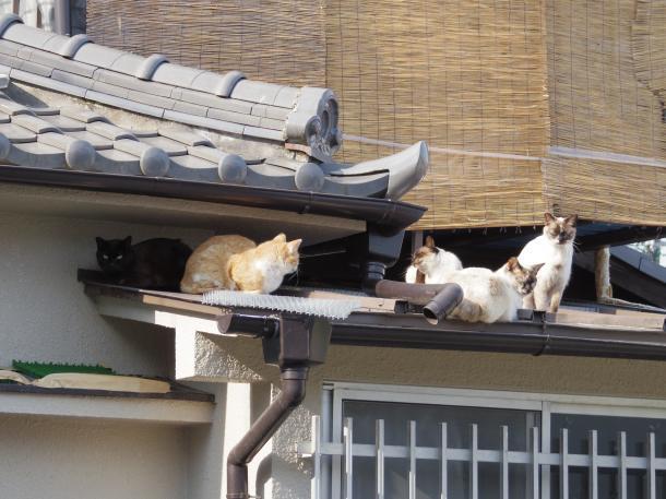猫6,7,8,9,10