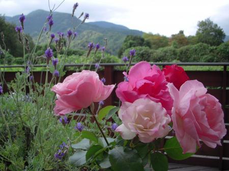 ミサヨさんの薔薇