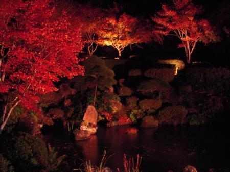 雲龍寺 もみじ庭園のライトアップ#2