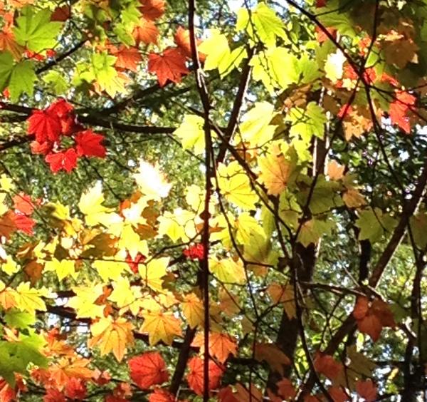 Oct13_7.jpg