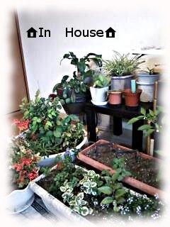 植物たち♪
