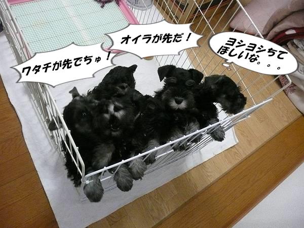 雅っ子4月2日1-s