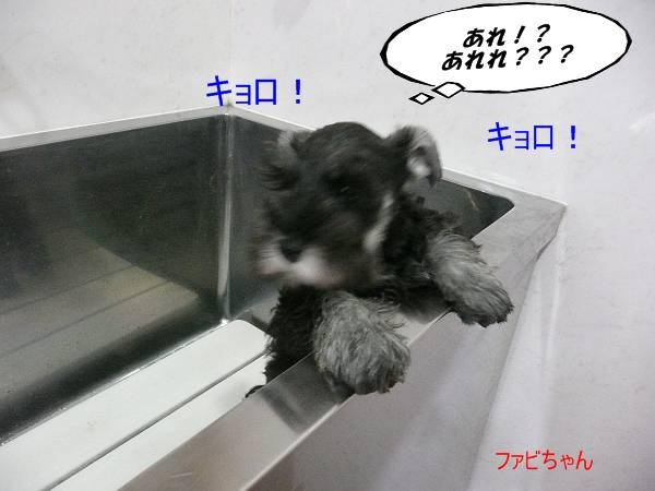 雅っ子ファビ4月4日-s