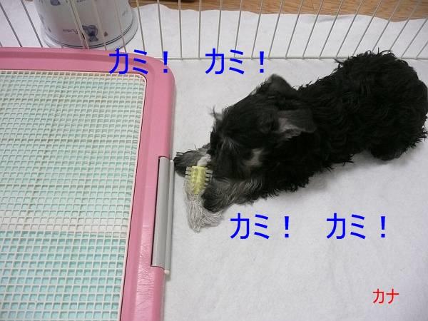 雅っ子ゆず4月13日-s