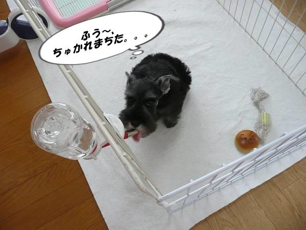 雅っ子ゆず4月13日2-s