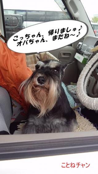 ことねチャン四国インター4月21日-s