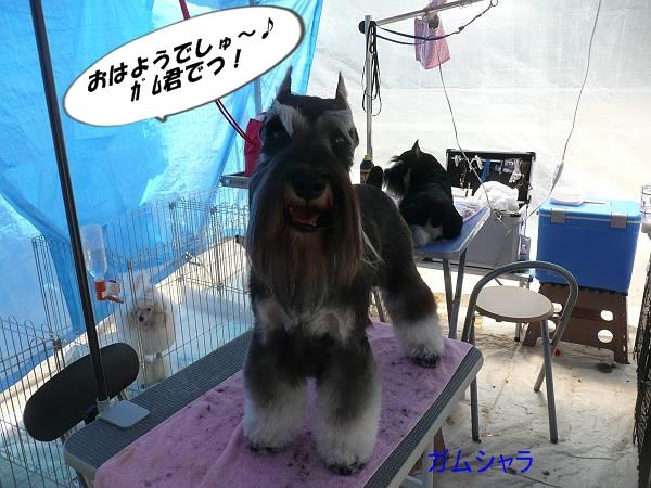 ガムシャラ尾道ショー5月5日-s