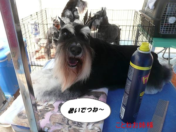 ことね尾道ショー5月5日-s