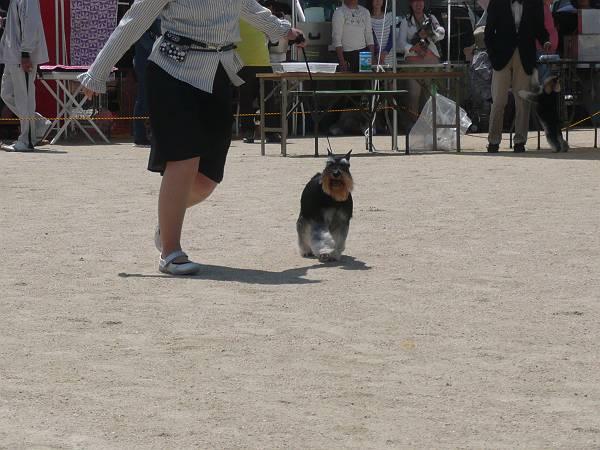 ことね尾道ショー5月5日4-s