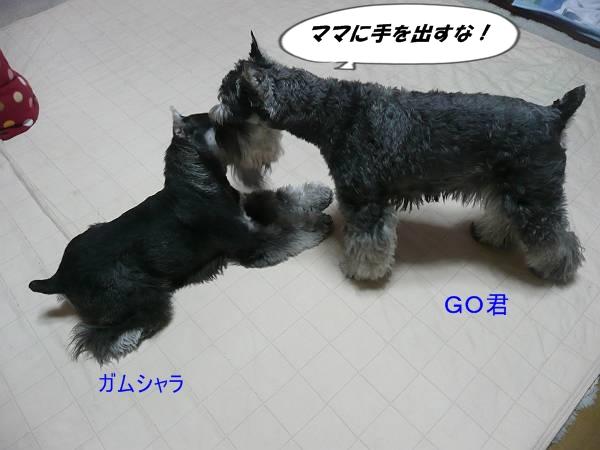 GO&ガムシャラ5月10日-s