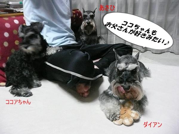 ココアちゃん5月25日6-s