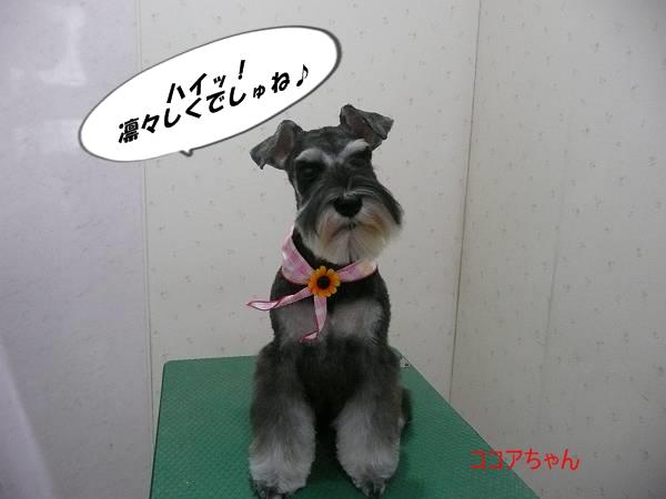 ココアちゃん7月29日-s
